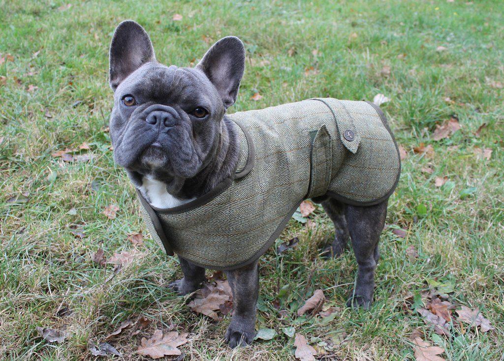 luxury tweed pug dog coat