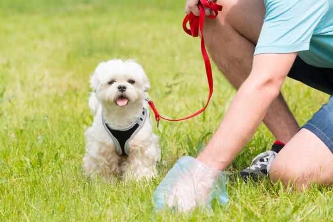 uk dog walking laws