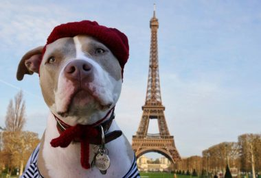 taking your dog to france