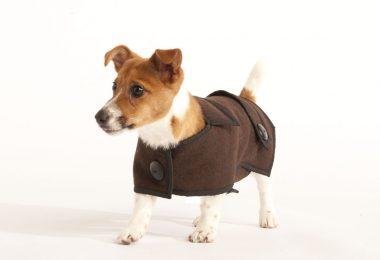 small dog coats