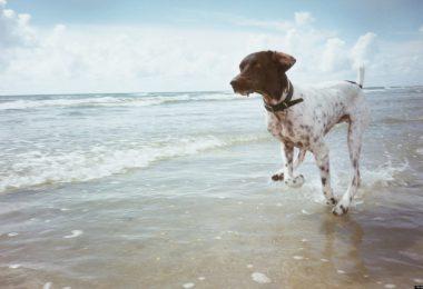 dog friendly hotels cornwall