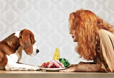 human foods toxic to dogs