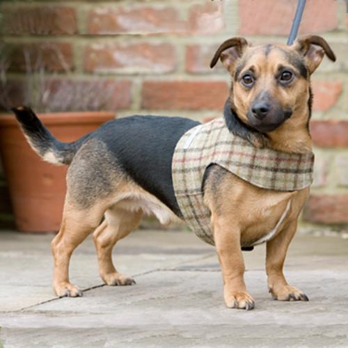 tweed dog harnesses