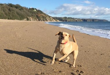 Strete Gate dog friendly beach in Devon