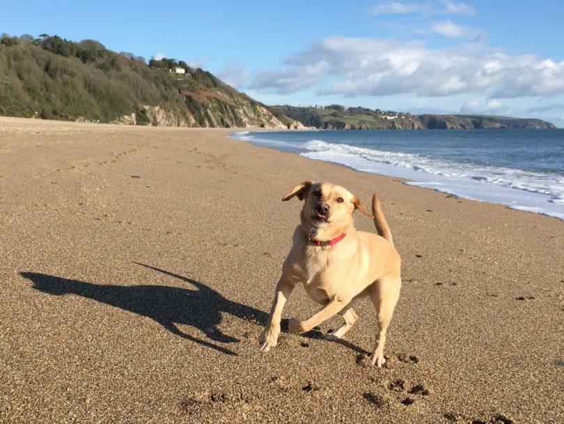 Strete Gate dog friendly beach in Devon