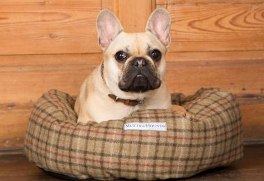 french bulldog accessories