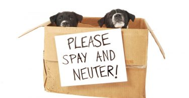 spay and neutering costs uk