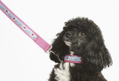 designer puppy collars