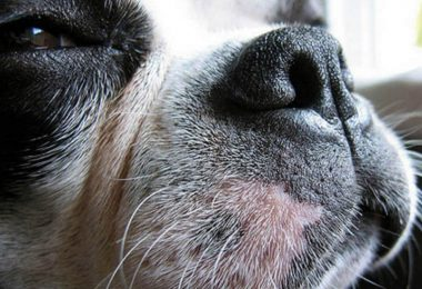 dog whiskers