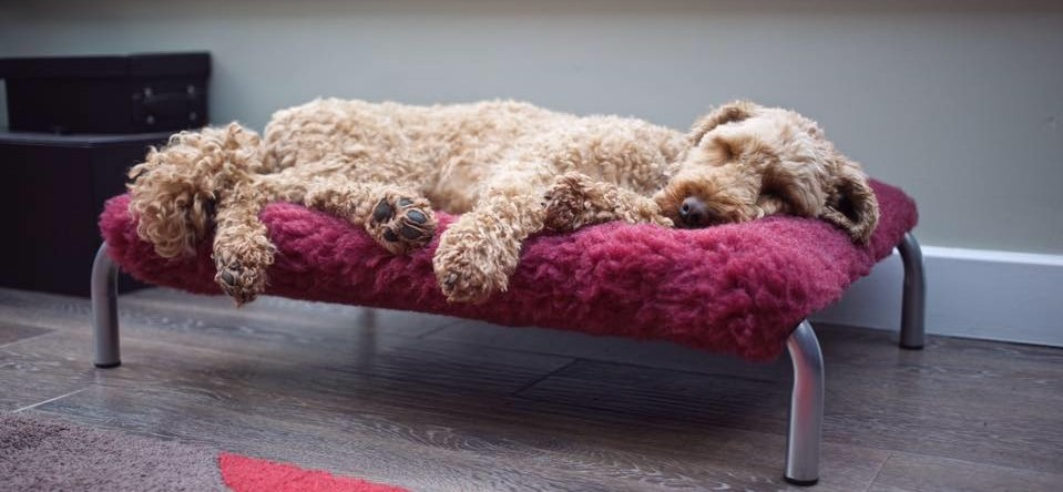 cosy sleeve dog bed cover