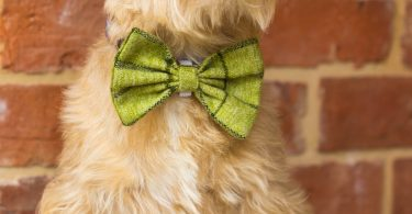 tweed dog bow ties