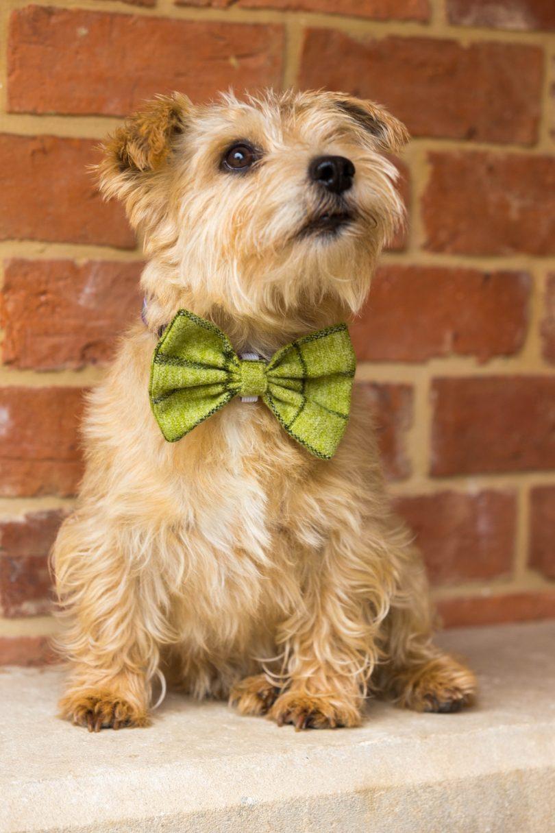 tweed dog bow ties