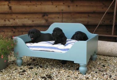raised dog beds