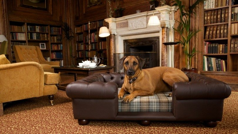 chesterfield dog beds
