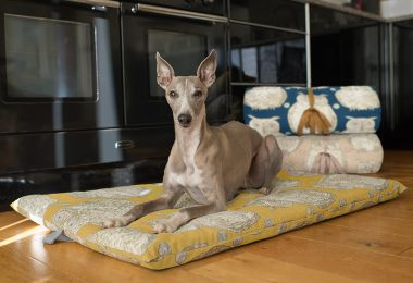 travel beds for dogs
