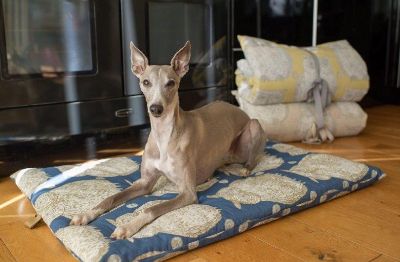 dog beds for summer