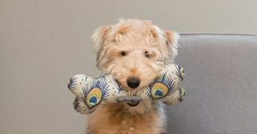 luxury dog toys