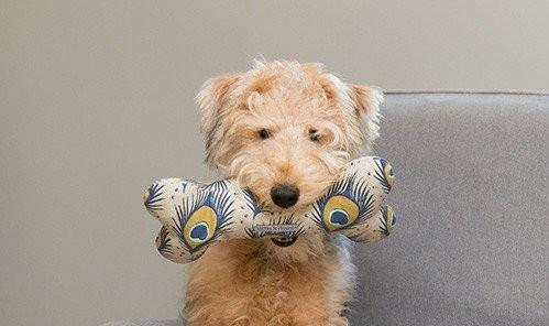 luxury dog toys
