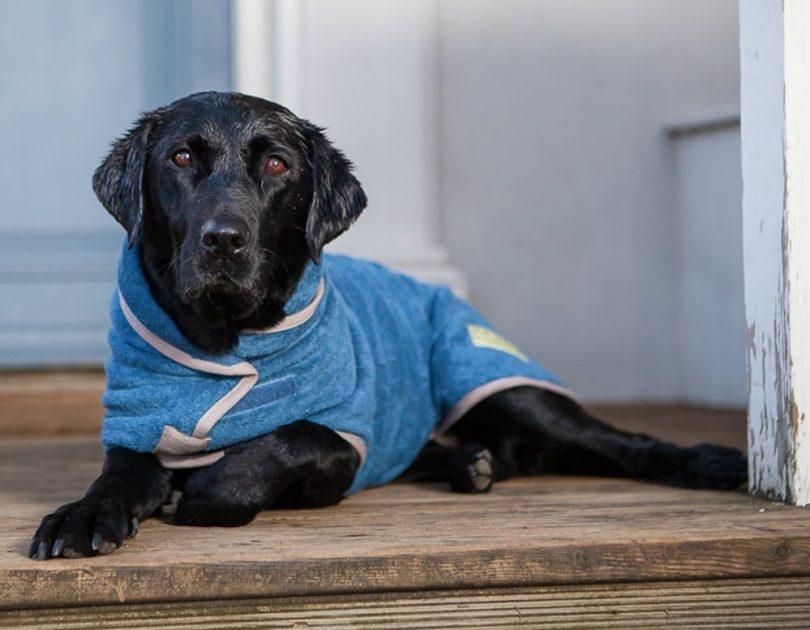 labrador dog coat