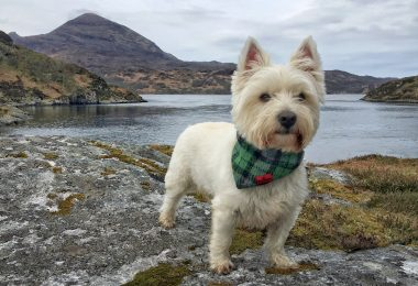 dog friendly hotels in scotland