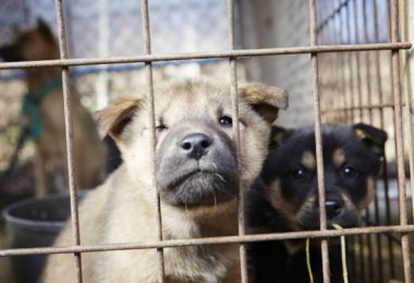 puppy farm new law