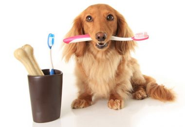 clean your dog's teeth