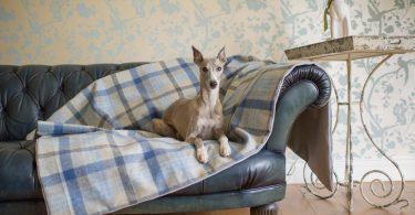 lounging hound