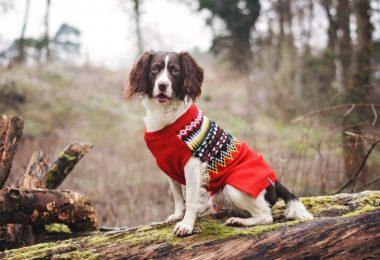 winter dog accessories 2018