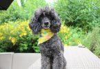 cool dog bandanas
