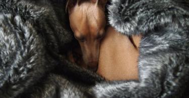 luxury pet blankets
