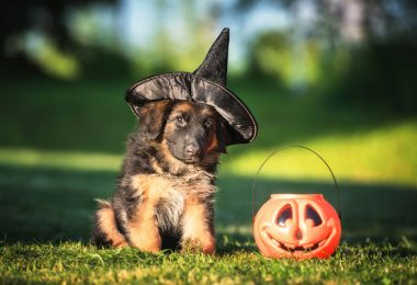 halloween dog accessories