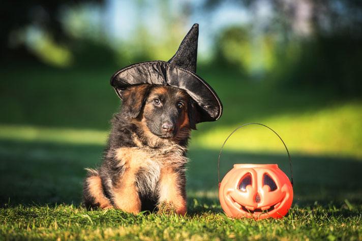halloween dog accessories