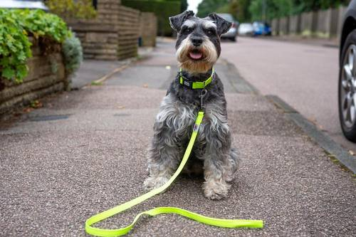reflective dog collars leads and harnesses