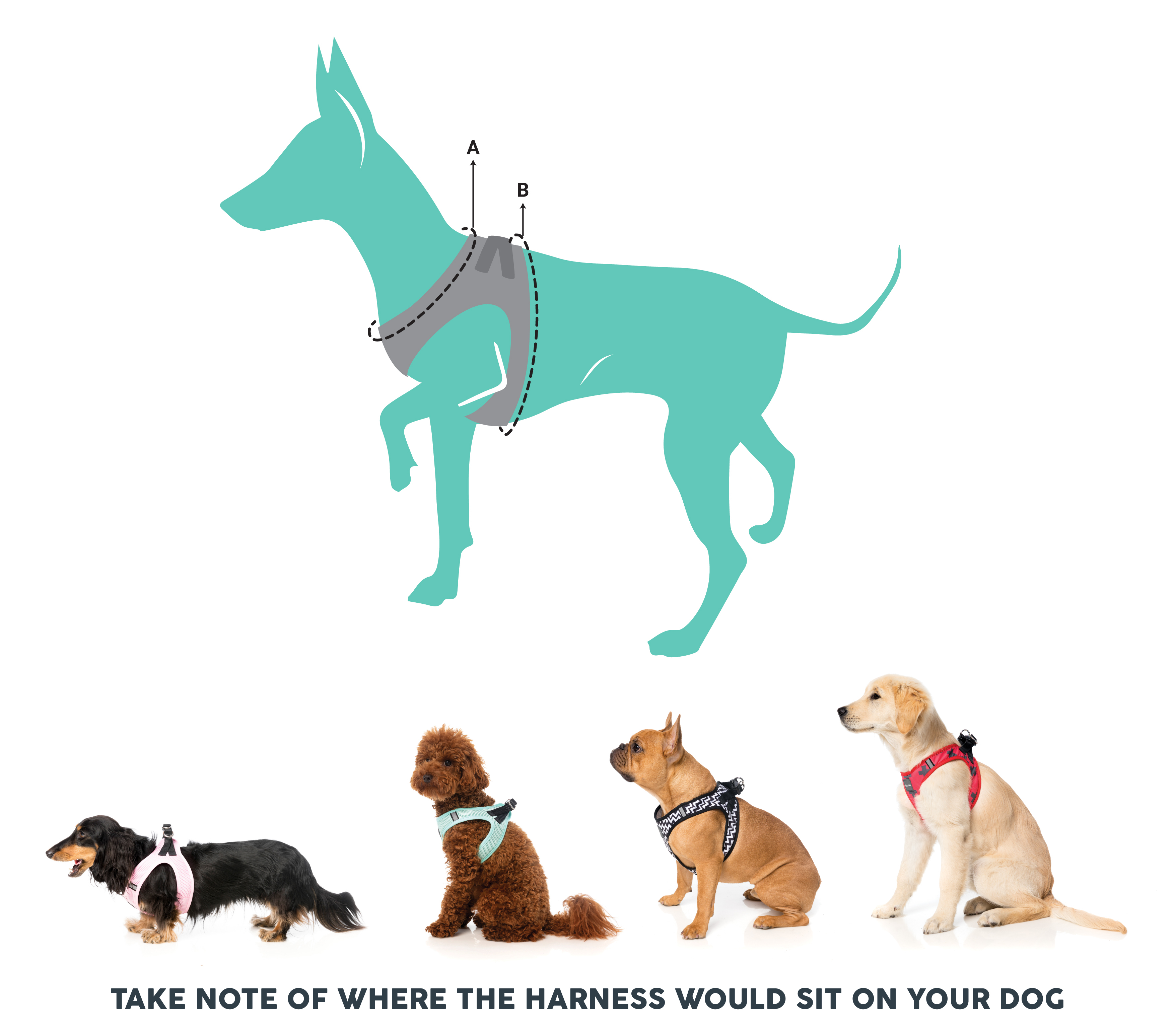 FuzzYard Step In Dog Harness Size Guide