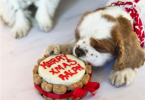 christmas cakes for dogs