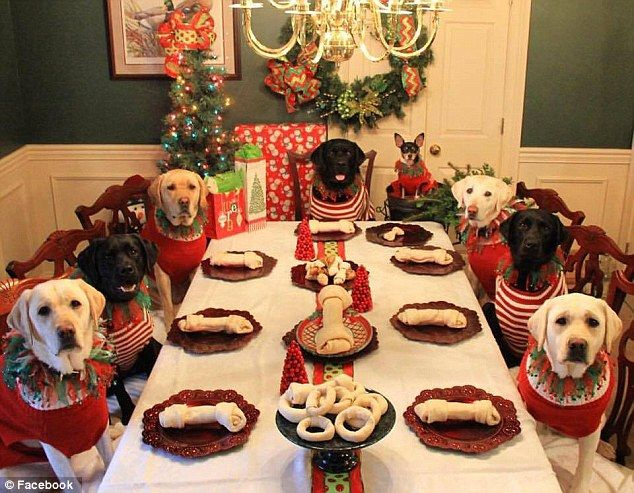 can dogs eat christmas dinner