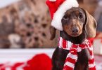 christmas getaways with your dog