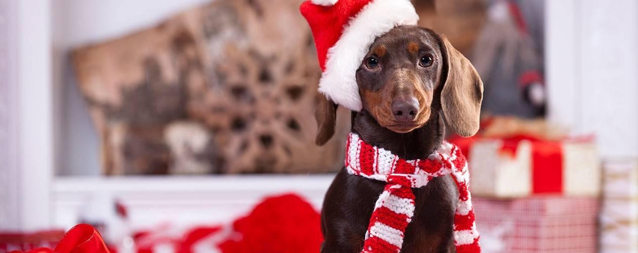 christmas getaways with your dog