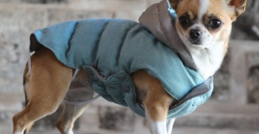 croci designer dog jackets
