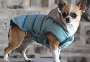 croci designer dog jackets