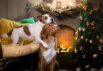 how to keep your dog safe this holiday season
