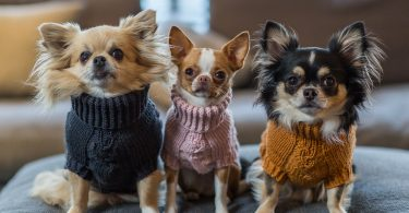 dog jumpers 2019