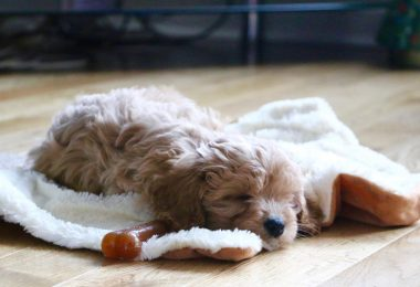 best beds for cavapoos