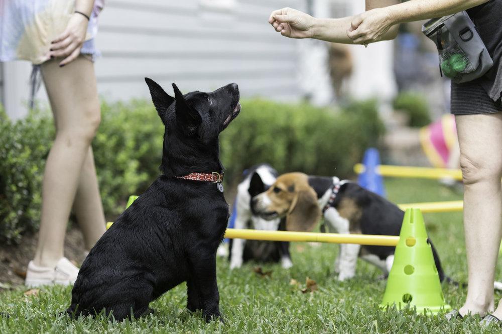 puppy classes training