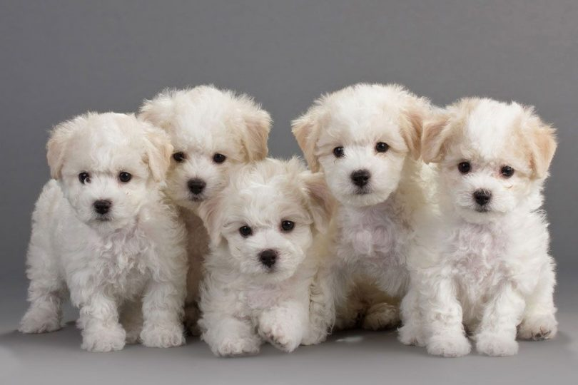 Top Puppy Names For 2019