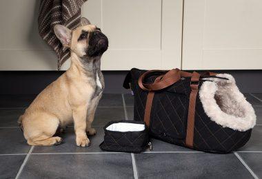 designer dog carriers