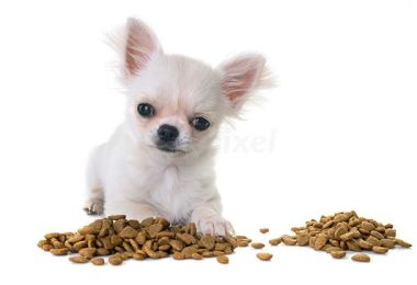 dog foods for chihuahuas