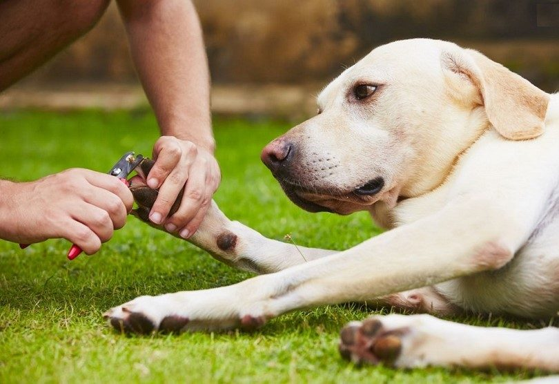cutting your dog's nails