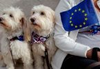 no deal brexit pet travel