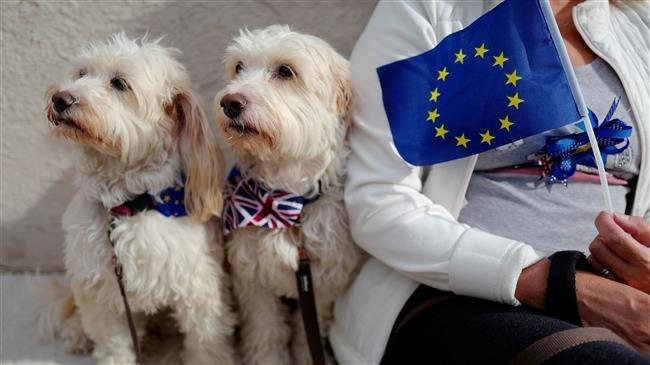 no deal brexit pet travel